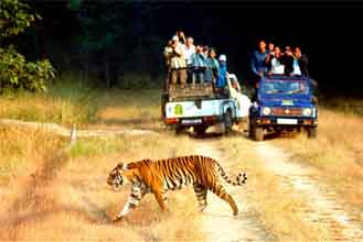 North India with wildlife tour