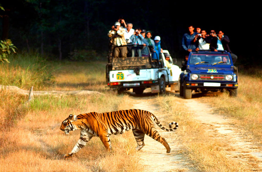 corbett-wildlife-travel-tours